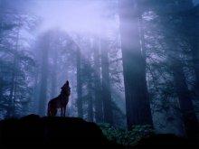 lonewolfbig1