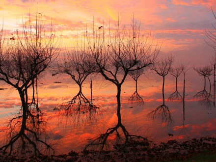reflections-beautiful-beauty-dark-nature-reflection-sky-sun-sunset-trees-water